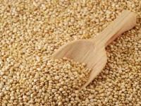 quinoa-semente