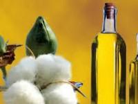 oleo de algodão